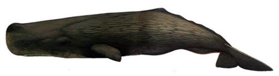 Sperm Whale BarcelonaSail