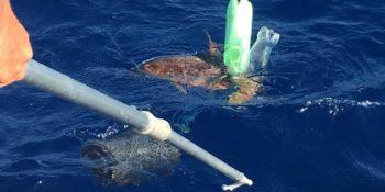 single use plastic kills turtles
